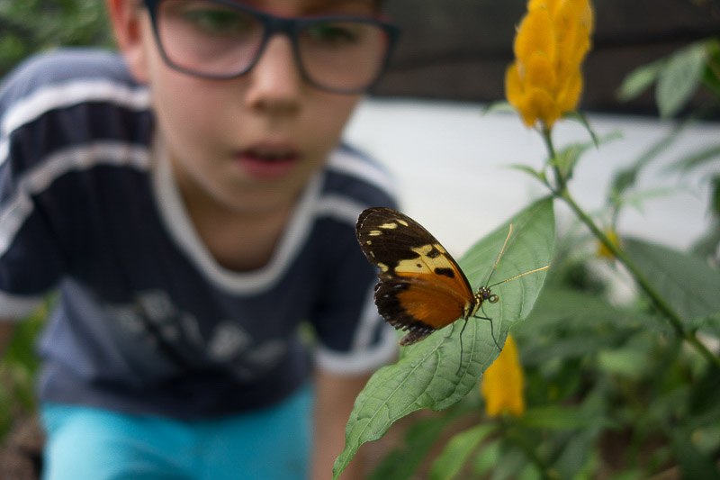 Our butterflies greenhouse